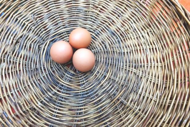 numeración en la cáscara del huevo