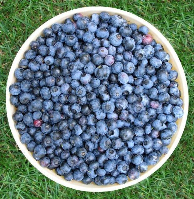 Antioxidantes cada día tomando arándanos