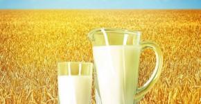 las mejores leches vegetales para la salud