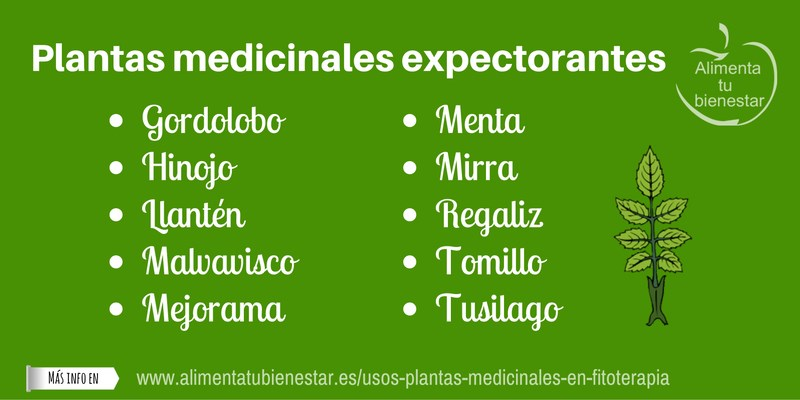 plantas medicinales expectorantes