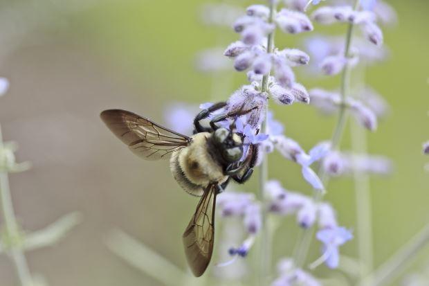 alergia estacional alergia al polen